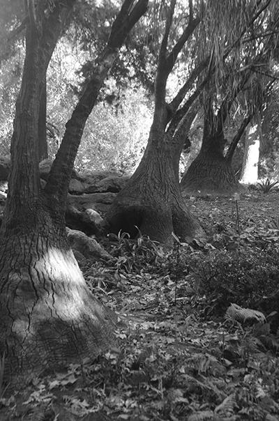 Reservas Costeras y Jardín Botánico Carlos Thais-1